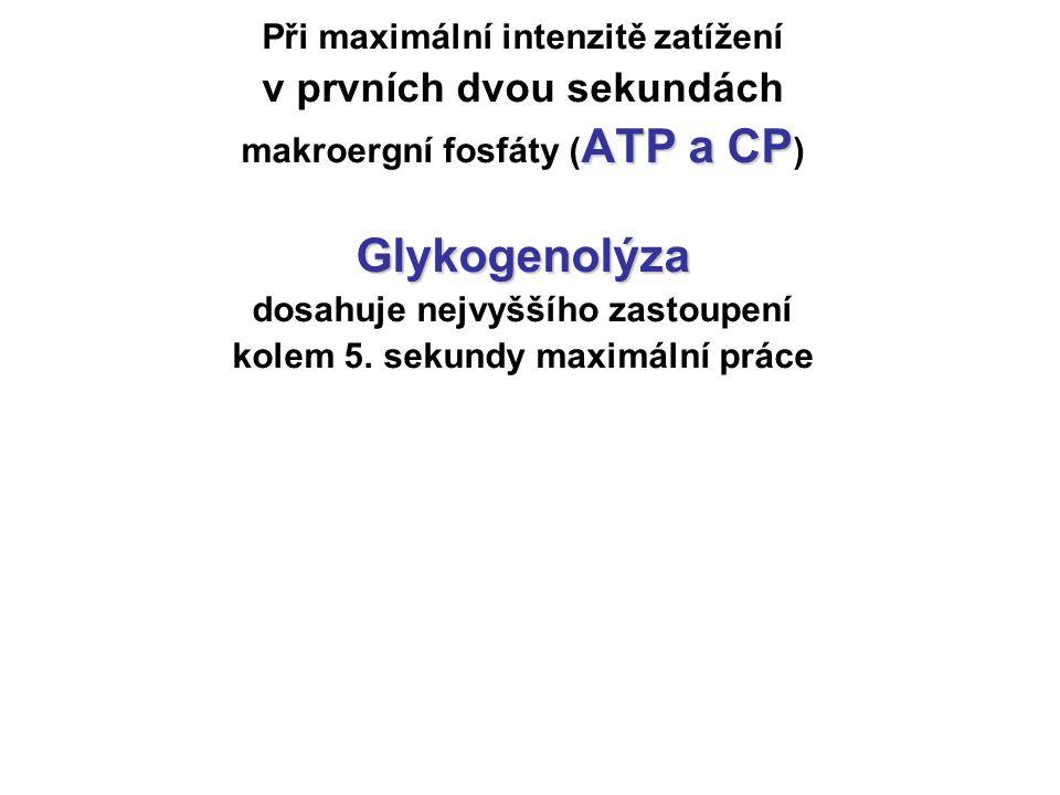 Glykogenolýza v prvních dvou sekundách