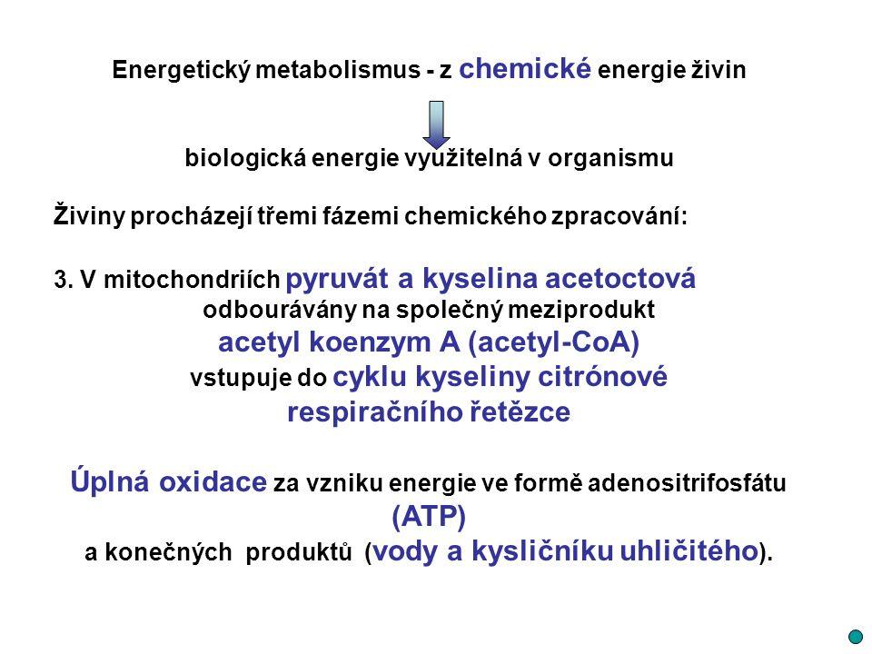 acetyl koenzym A (acetyl-CoA) respiračního řetězce