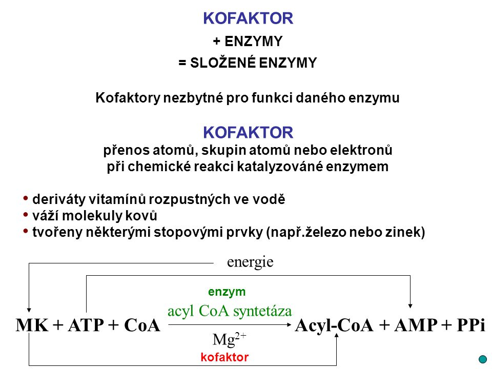 MK + ATP + CoA Acyl-CoA + AMP + PPi KOFAKTOR energie