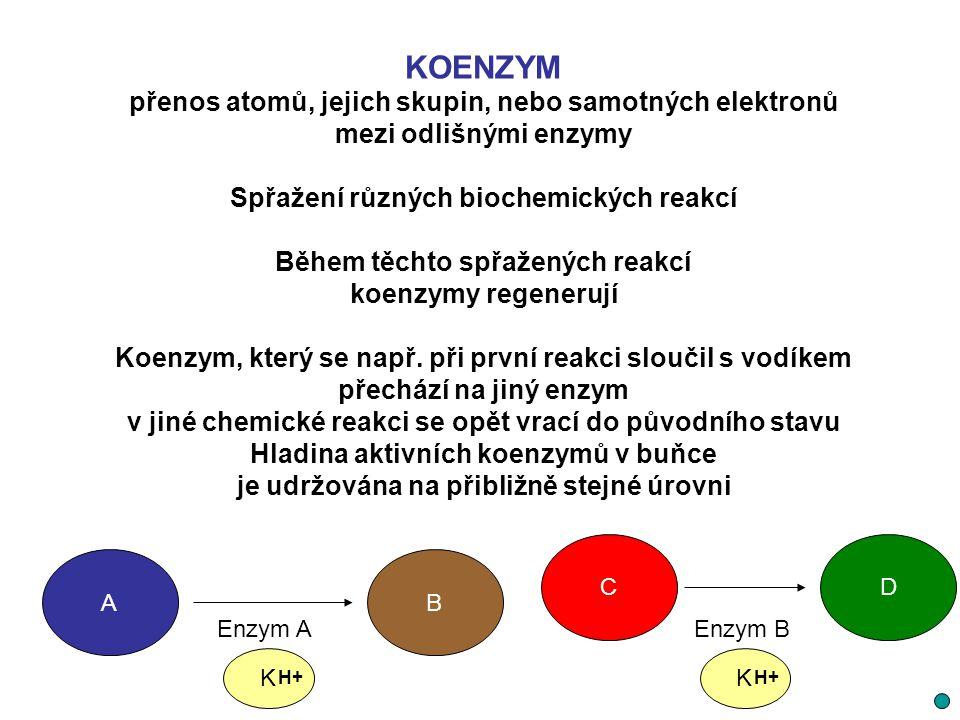 KOENZYM přenos atomů, jejich skupin, nebo samotných elektronů
