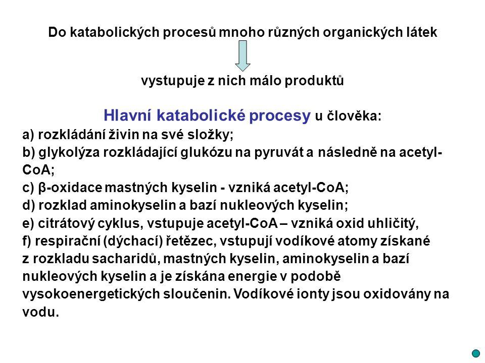 Hlavní katabolické procesy u člověka: