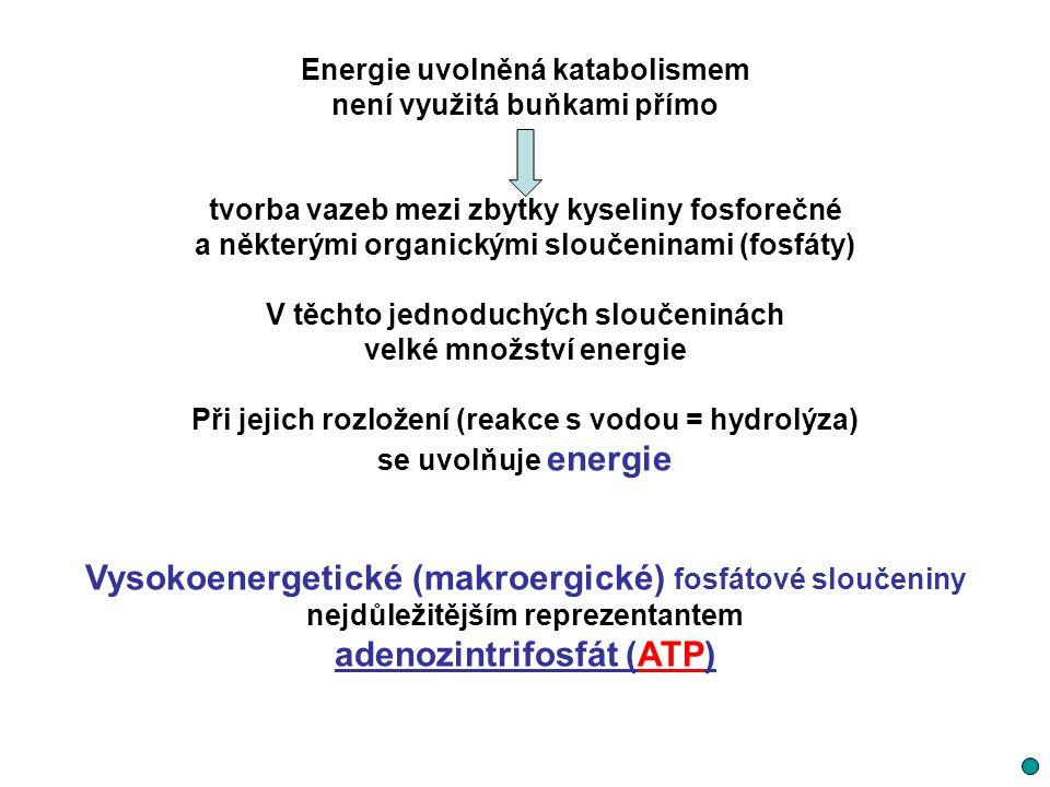 Vysokoenergetické (makroergické) fosfátové sloučeniny