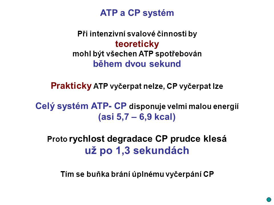 už po 1,3 sekundách ATP a CP systém teoreticky během dvou sekund