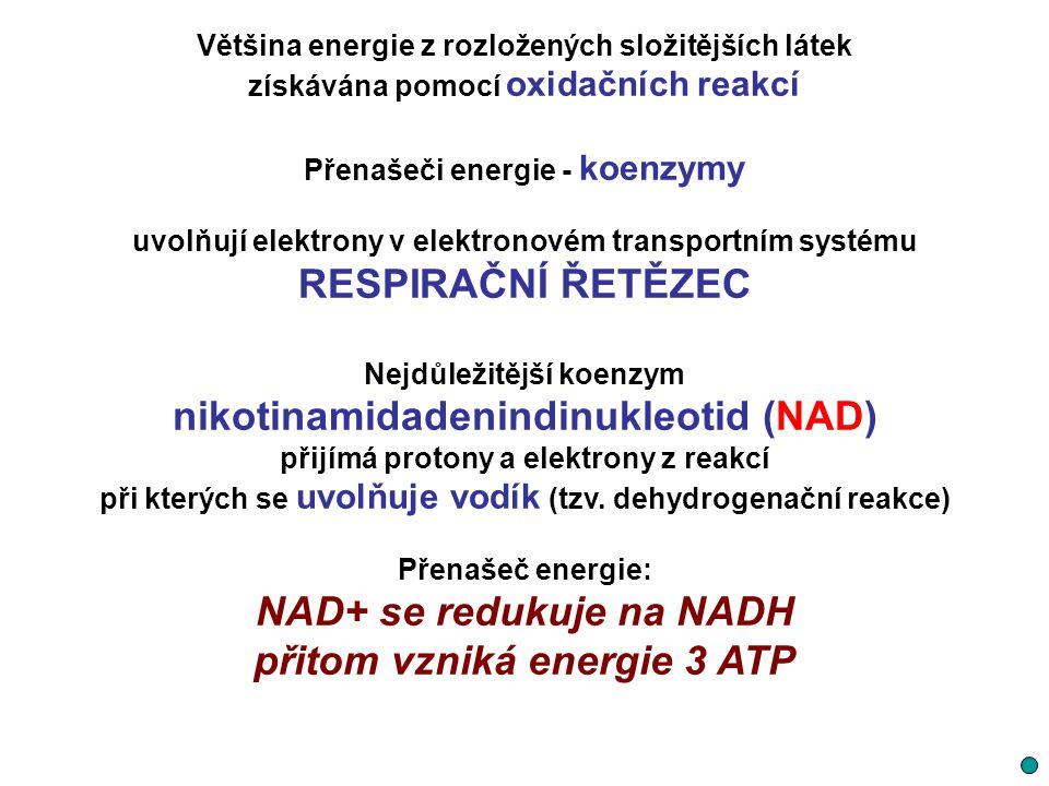 nikotinamidadenindinukleotid (NAD)