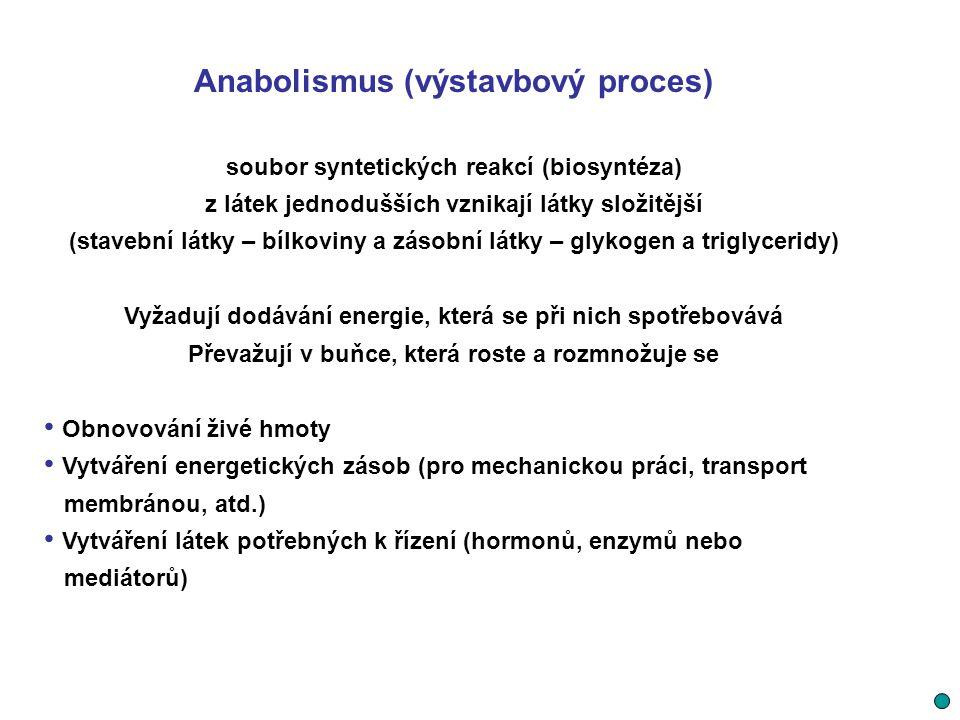 Anabolismus (výstavbový proces)
