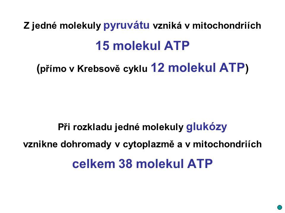 15 molekul ATP celkem 38 molekul ATP