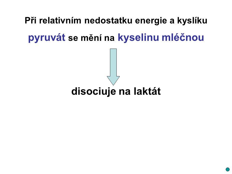 pyruvát se mění na kyselinu mléčnou disociuje na laktát