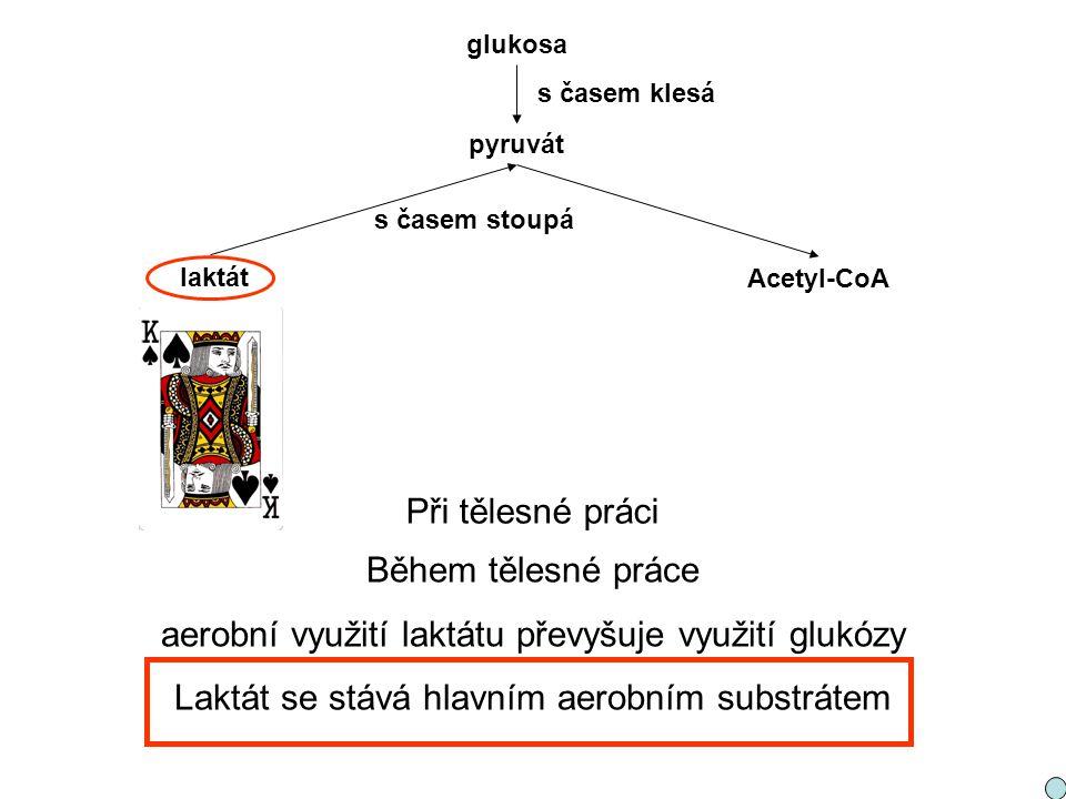 aerobní využití laktátu převyšuje využití glukózy