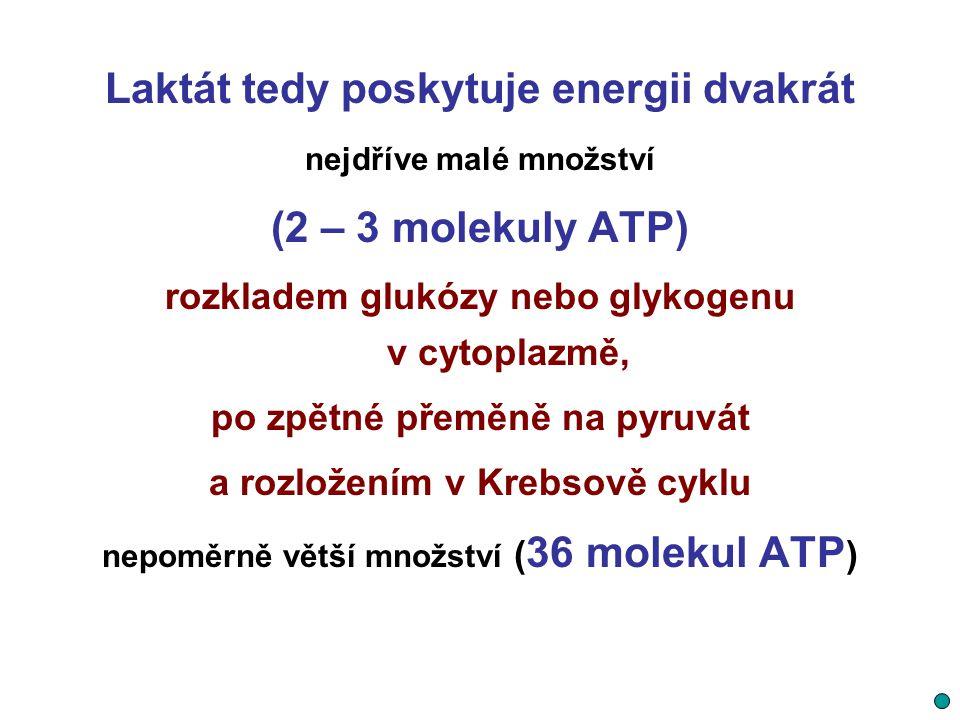 Laktát tedy poskytuje energii dvakrát (2 – 3 molekuly ATP)