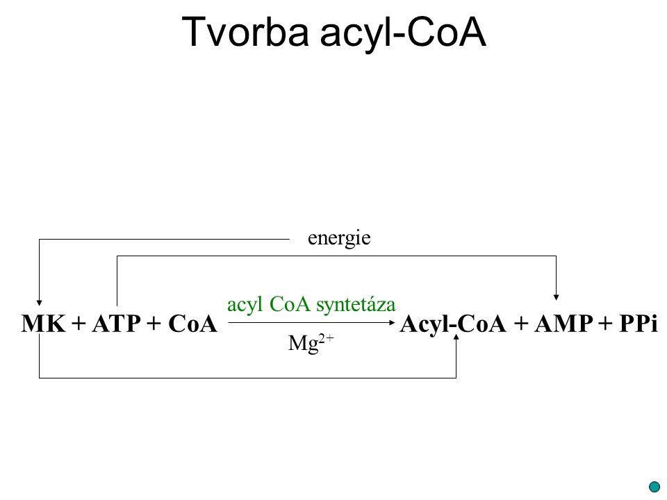 Tvorba acyl-CoA MK + ATP + CoA Acyl-CoA + AMP + PPi energie