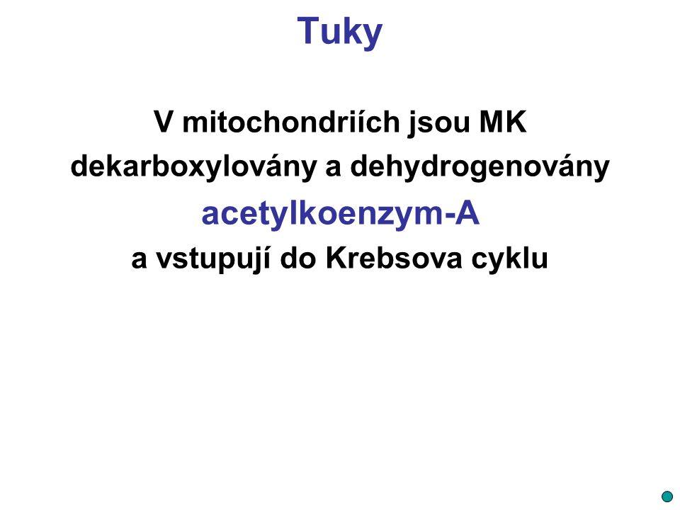 Tuky acetylkoenzym-A V mitochondriích jsou MK