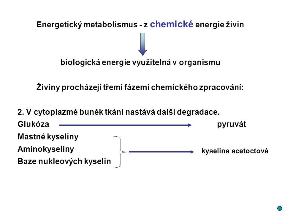 Energetický metabolismus - z chemické energie živin