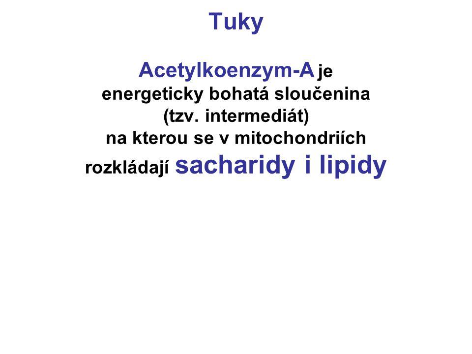 Tuky Acetylkoenzym-A je energeticky bohatá sloučenina