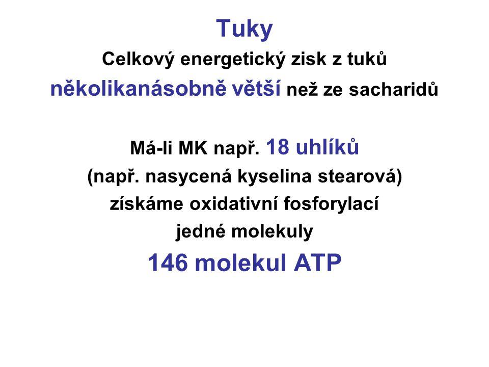 Tuky 146 molekul ATP několikanásobně větší než ze sacharidů