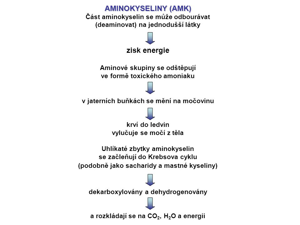 AMINOKYSELINY (AMK) zisk energie