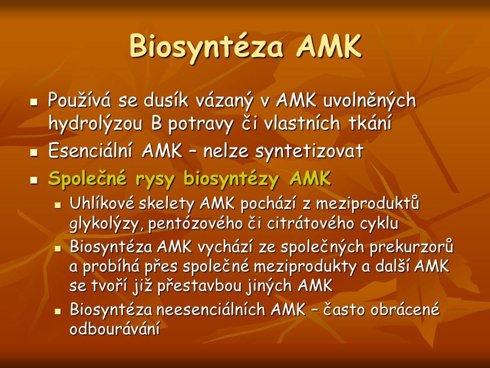 Biosyntéza AMK Používá se dusík vázaný v AMK uvolněných hydrolýzou B potravy či vlastních tkání. Esenciální AMK – nelze syntetizovat.