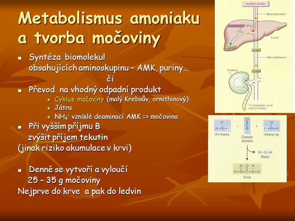 Metabolismus amoniaku a tvorba močoviny