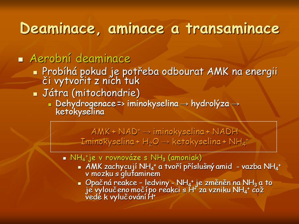 Deaminace, aminace a transaminace