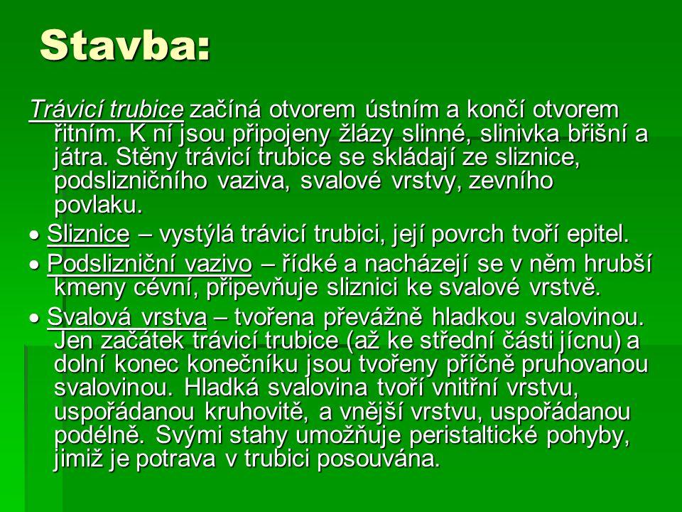 Stavba: