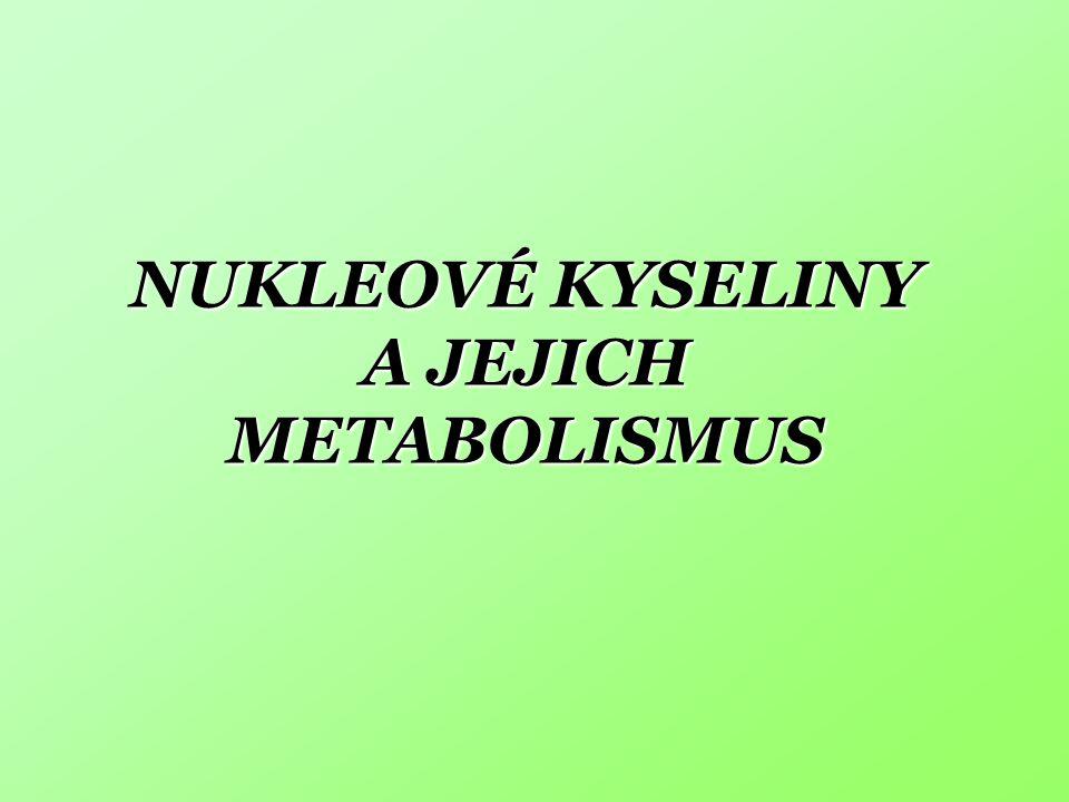 NUKLEOVÉ KYSELINY A JEJICH METABOLISMUS