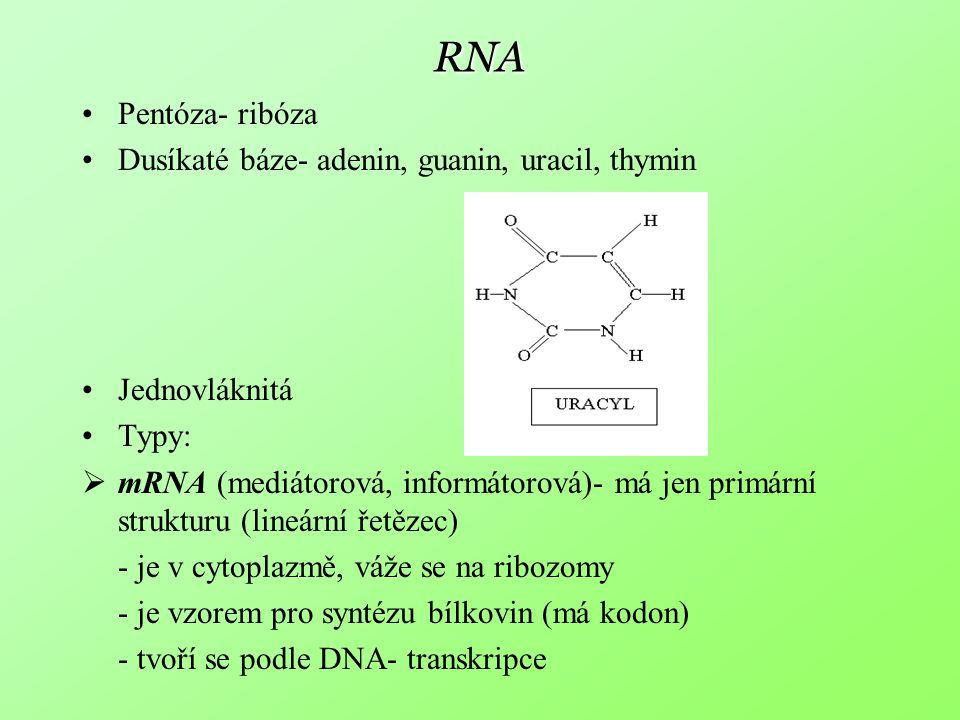 RNA Pentóza- ribóza Dusíkaté báze- adenin, guanin, uracil, thymin