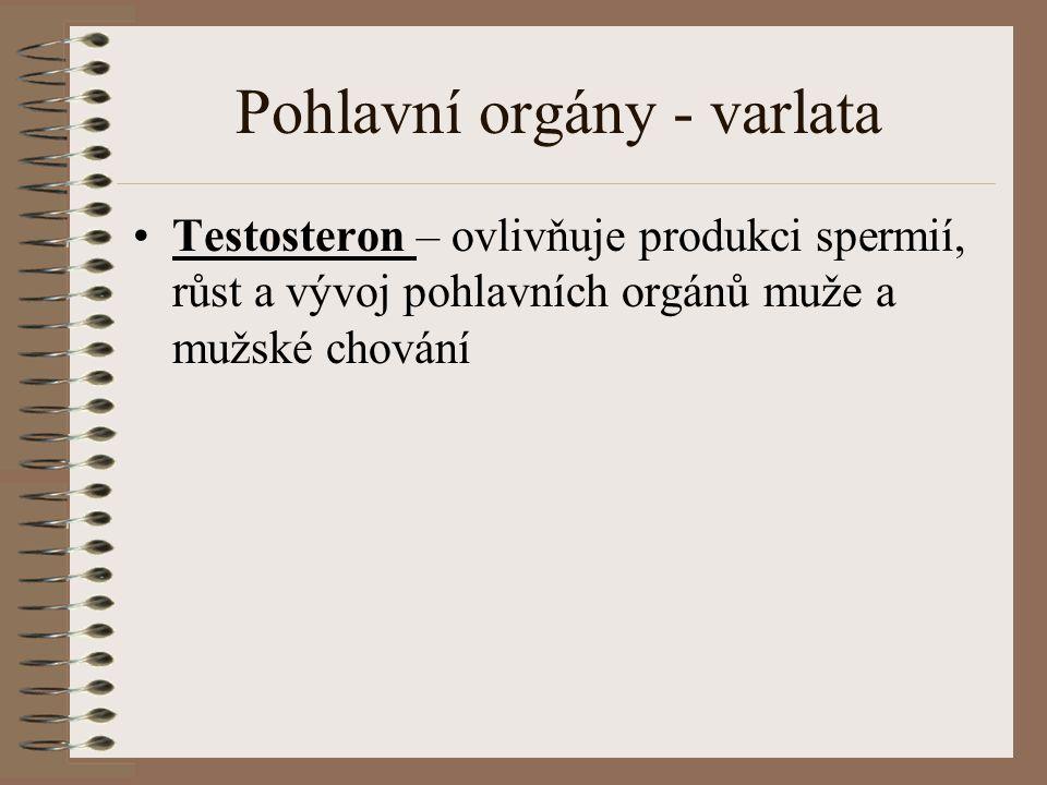 Pohlavní orgány - varlata
