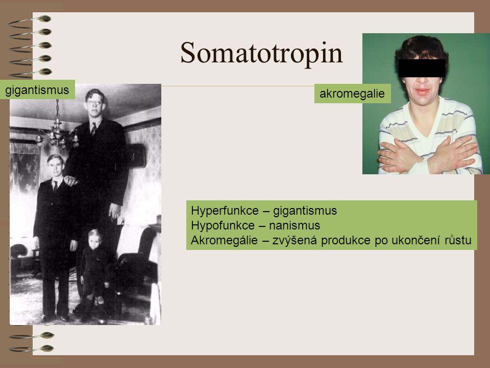 Somatotropin gigantismus akromegalie Hyperfunkce – gigantismus