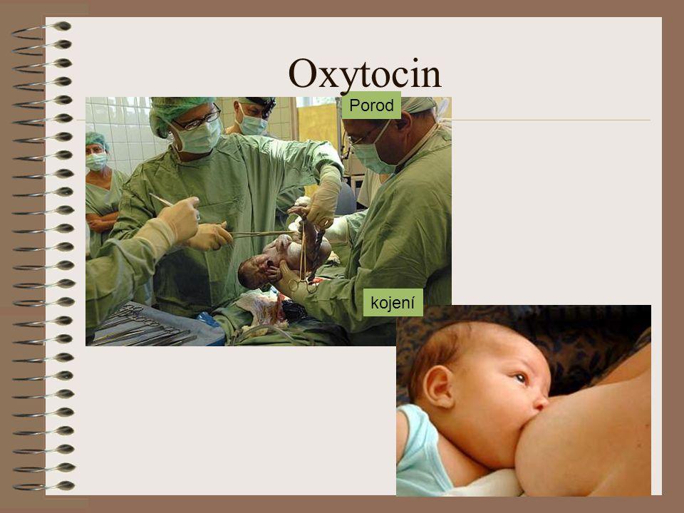 Oxytocin Porod kojení