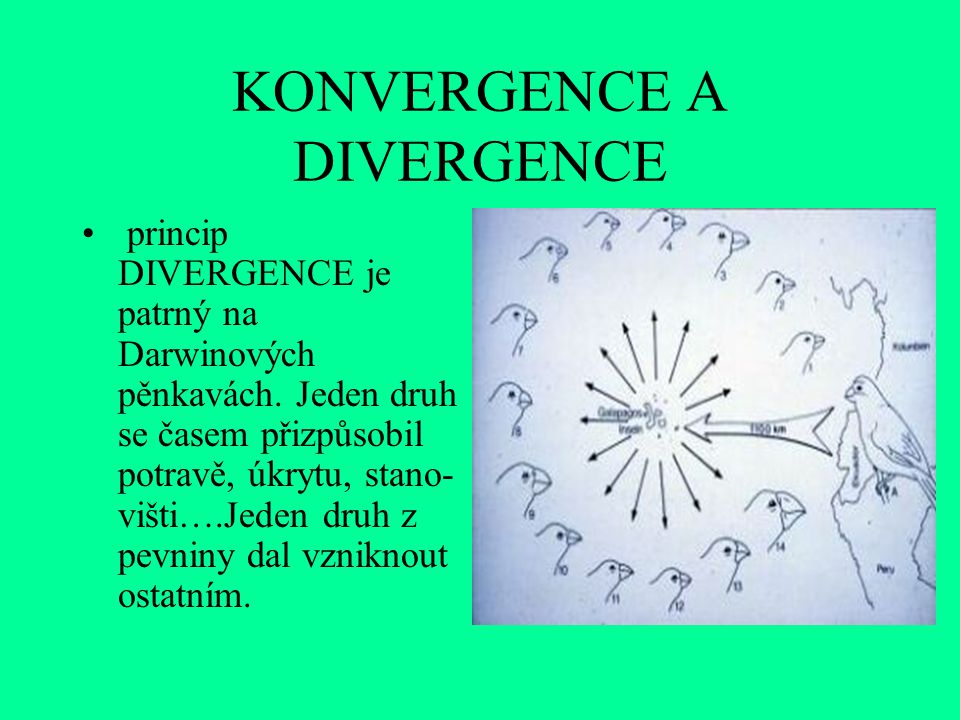 KONVERGENCE A DIVERGENCE