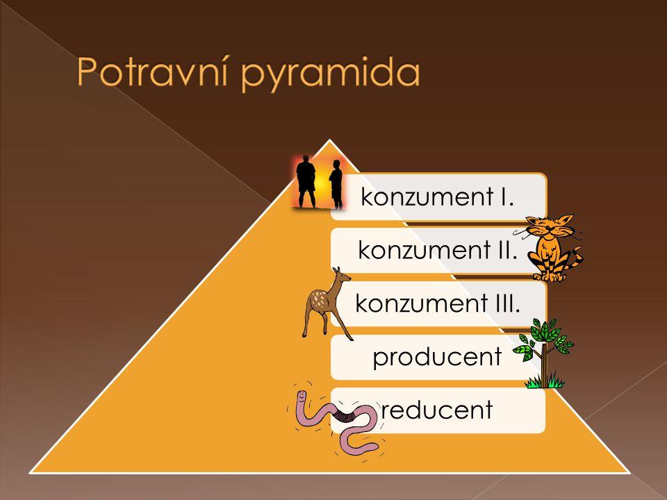 Potravní pyramida konzument I. konzument II. konzument III. producent