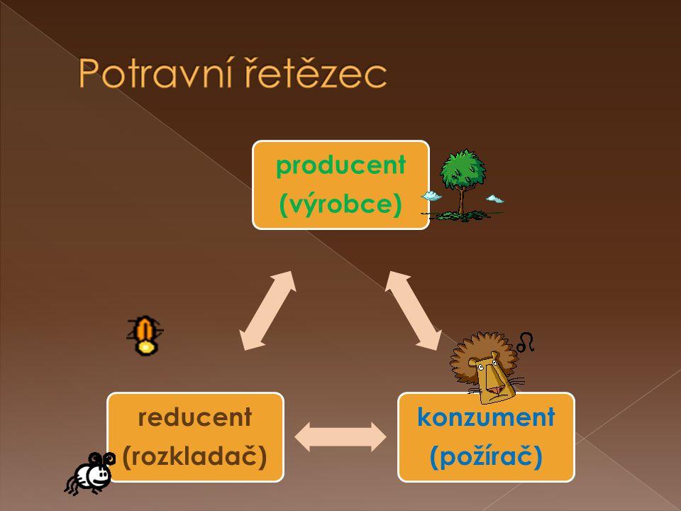 Potravní řetězec producent (výrobce) konzument (požírač) (rozkladač)