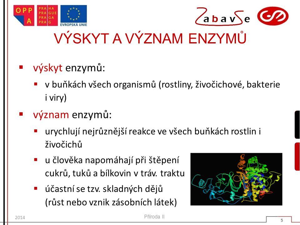 VÝSKYT A VÝZNAM ENZYMŮ výskyt enzymů: význam enzymů: