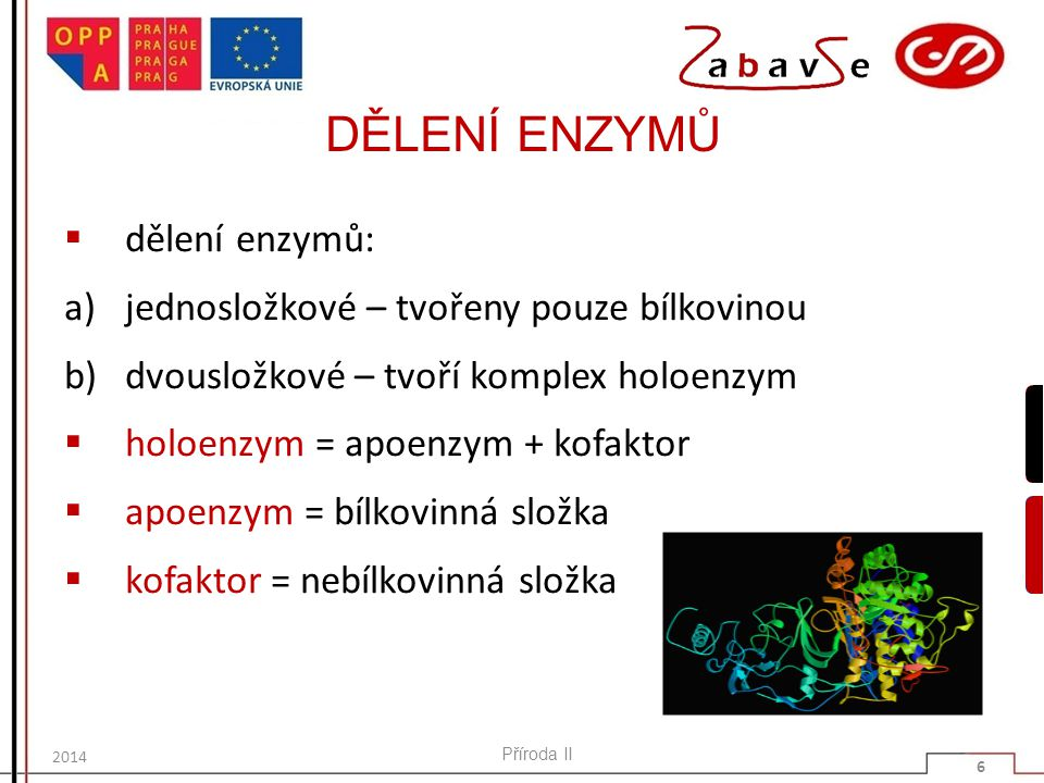 DĚLENÍ ENZYMŮ dělení enzymů: jednosložkové – tvořeny pouze bílkovinou
