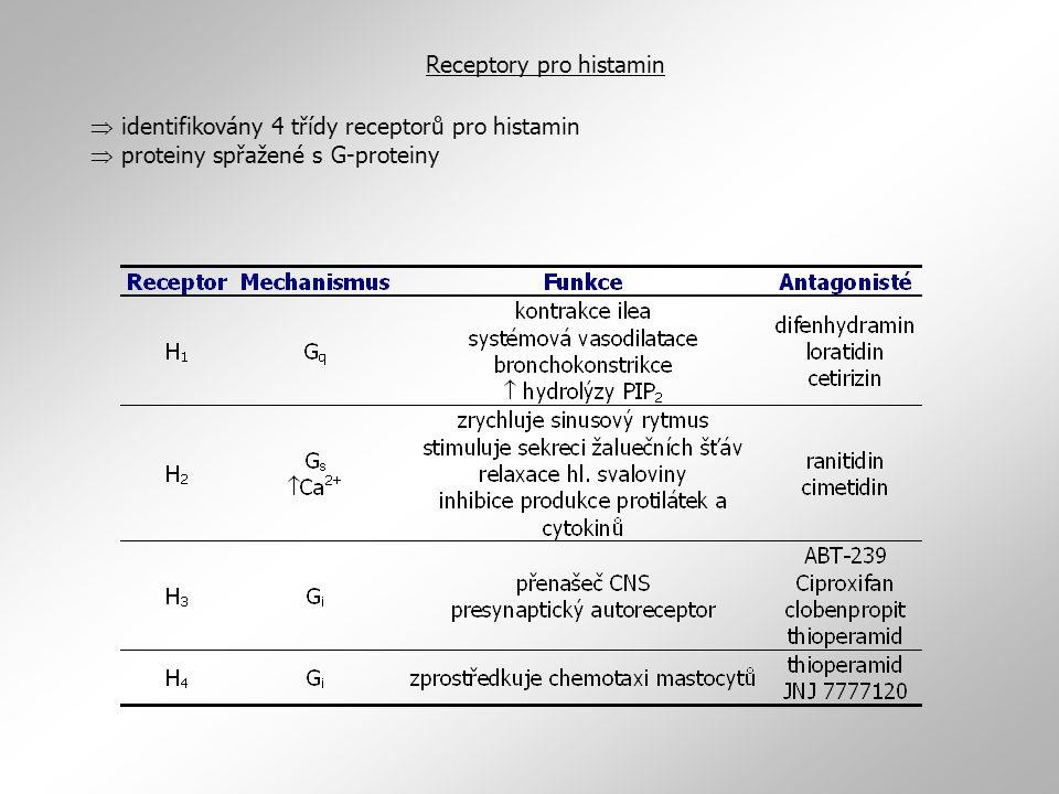 Receptory pro histamin