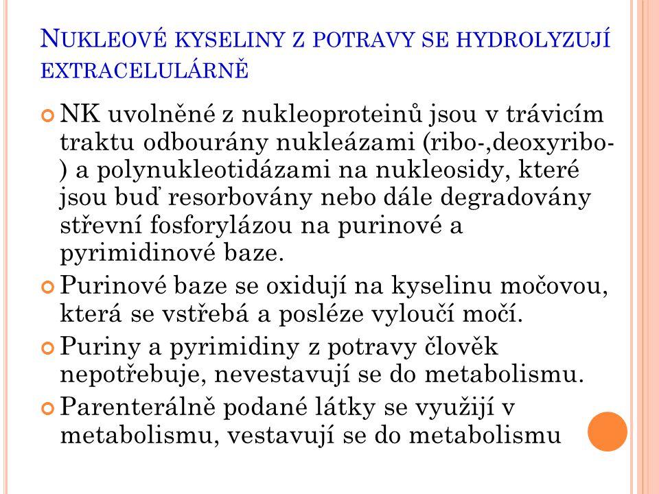 Nukleové kyseliny z potravy se hydrolyzují extracelulárně