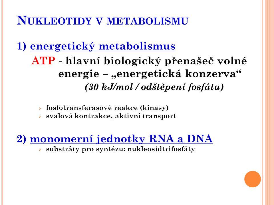 Nukleotidy v metabolismu