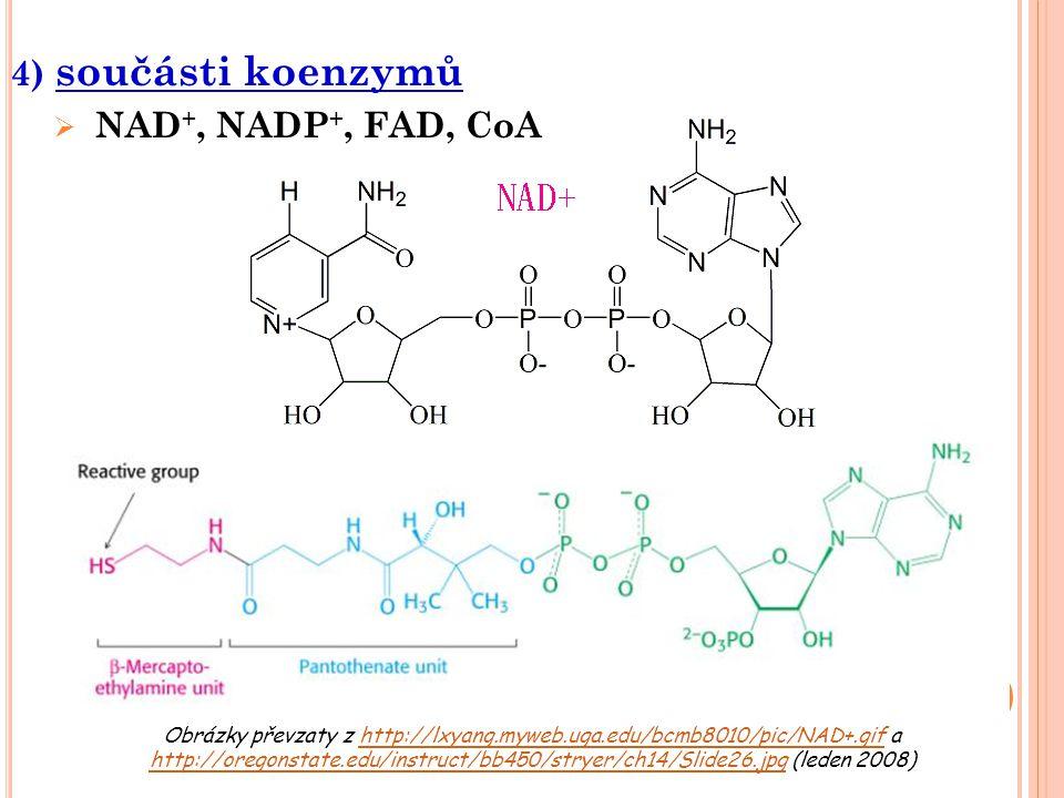 4) součásti koenzymů NAD+, NADP+, FAD, CoA