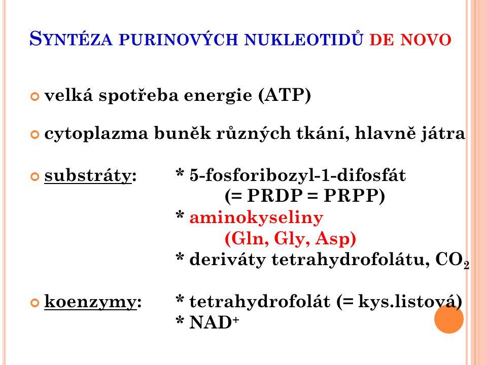 Syntéza purinových nukleotidů de novo