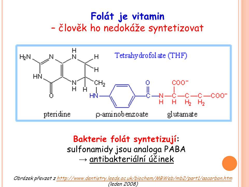 Folát je vitamin – člověk ho nedokáže syntetizovat