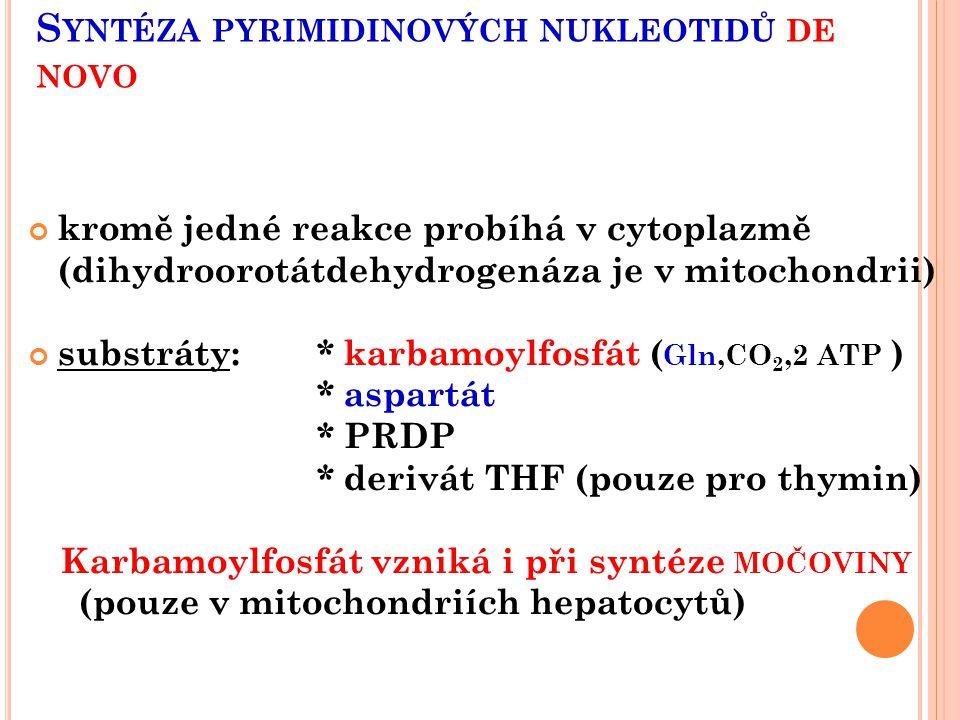 Syntéza pyrimidinových nukleotidů de novo