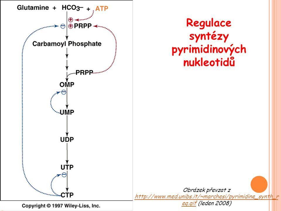Regulace syntézy pyrimidinových nukleotidů