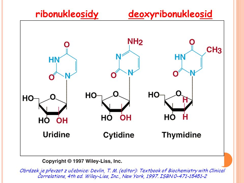 ribonukleosidy deoxyribonukleosid