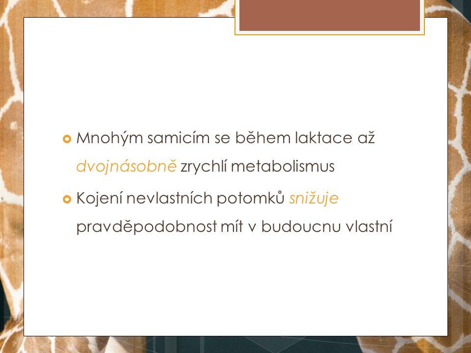 Mnohým samicím se během laktace až dvojnásobně zrychlí metabolismus