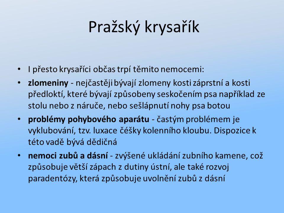 Pražský krysařík I přesto krysaříci občas trpí těmito nemocemi: