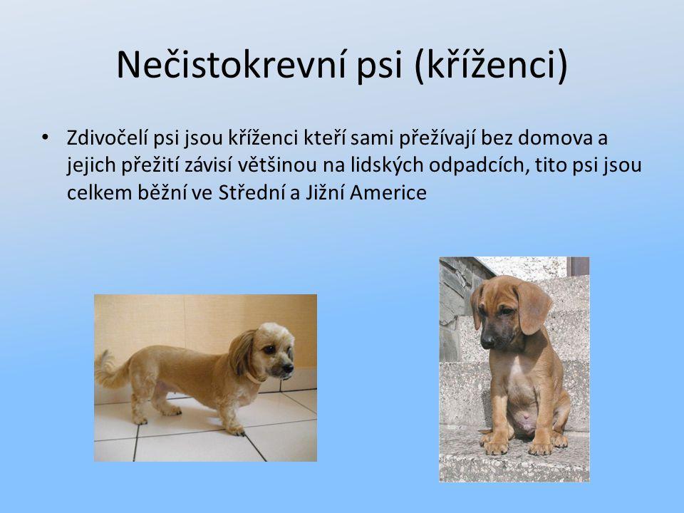 Nečistokrevní psi (kříženci)