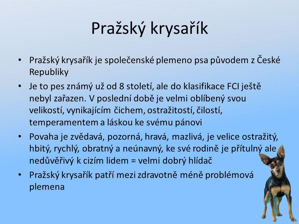 Pražský krysařík Pražský krysařík je společenské plemeno psa původem z České Republiky.
