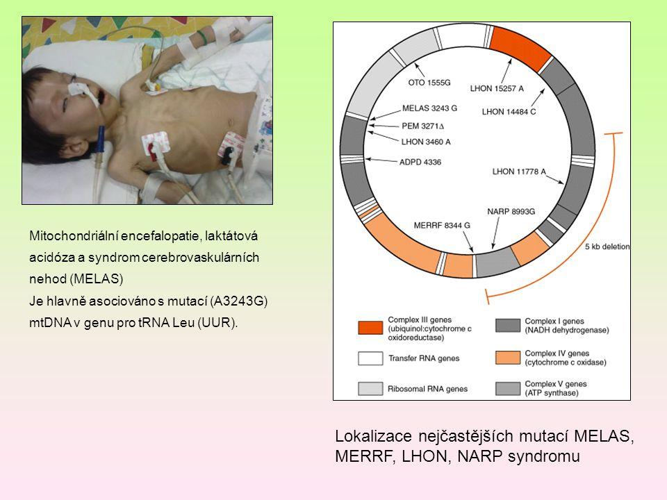 Lokalizace nejčastějších mutací MELAS, MERRF, LHON, NARP syndromu
