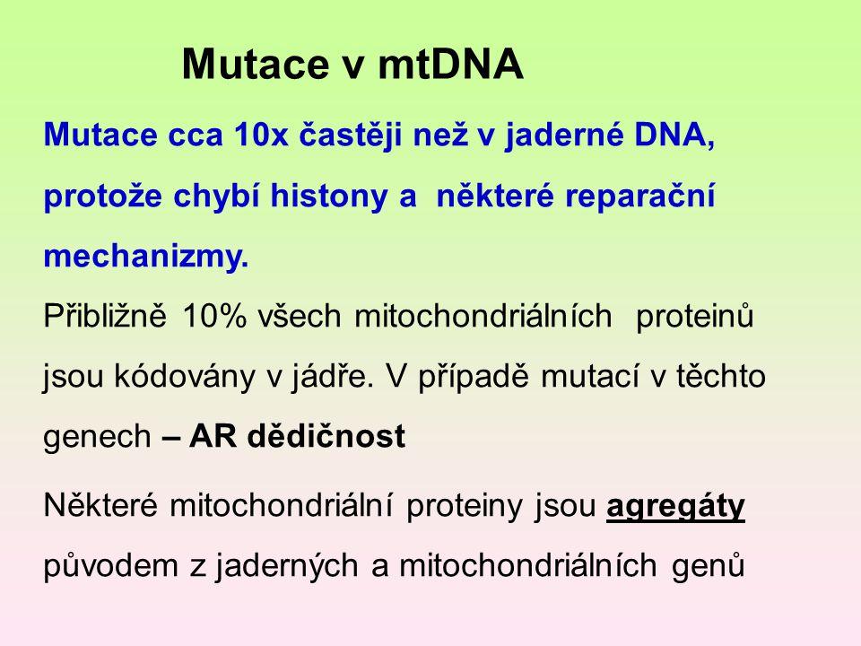 Mutace v mtDNA Mutace cca 10x častěji než v jaderné DNA, protože chybí histony a některé reparační mechanizmy.