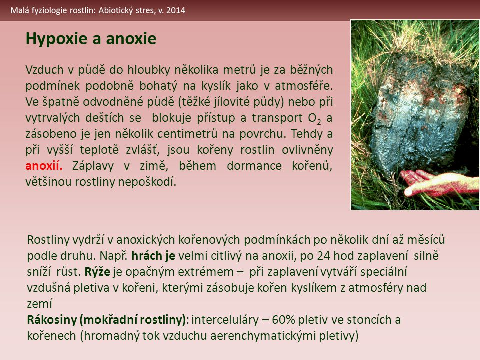 Hypoxie a anoxie