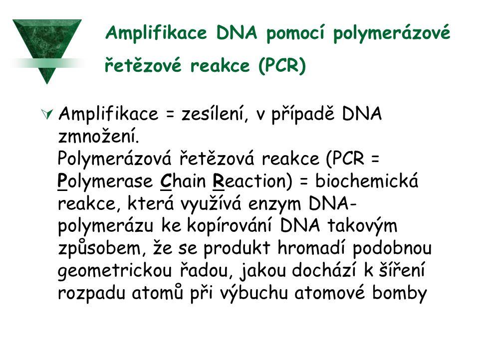 Amplifikace DNA pomocí polymerázové řetězové reakce (PCR)